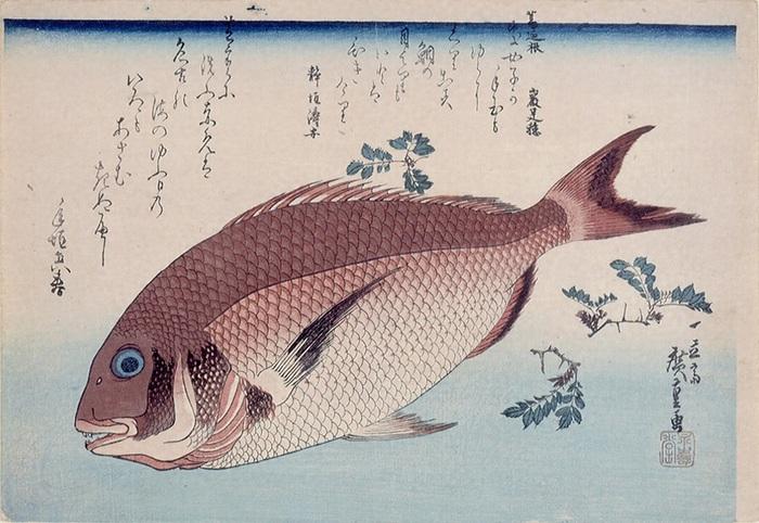 鯛に山椒.jpg