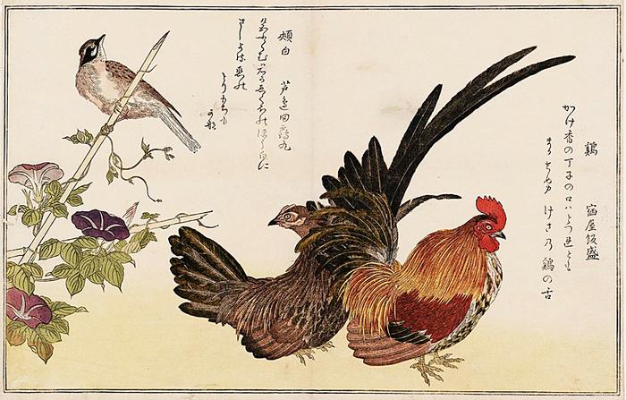 鶏と頬白.jpg